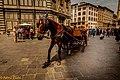 Cavallo Da Firenze (60030602).jpeg