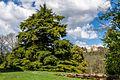 Cedro dell'Himalaya nel Parco di Villa Ghigi.jpg