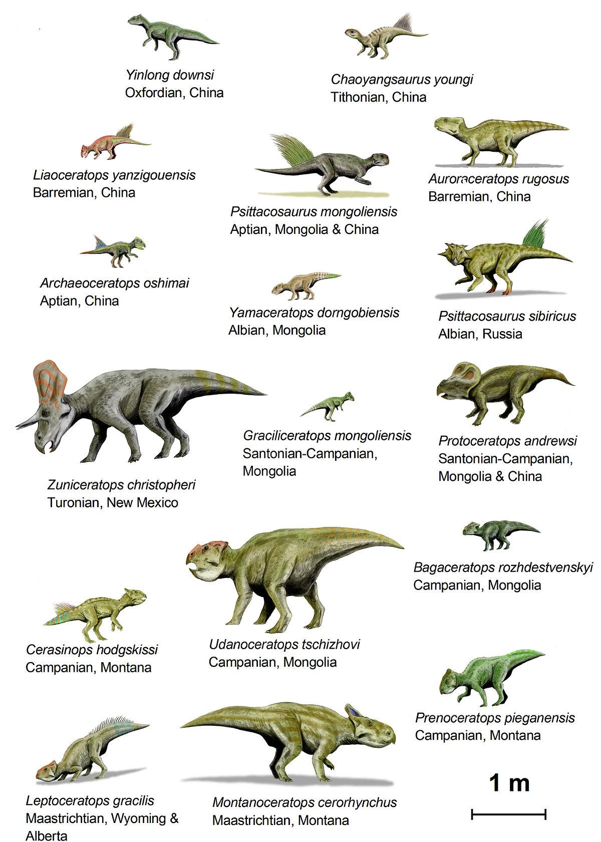 Цератопсы (инфраотряд динозавров)