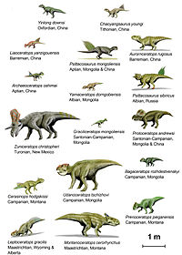 An Illustration of 18 species of basal ceratopsia to scale.