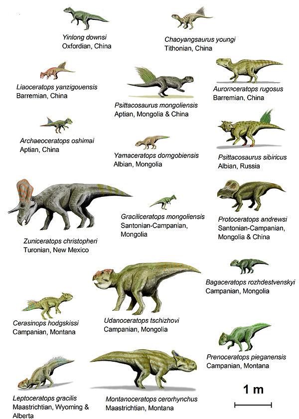 Фото динозавров с рогом