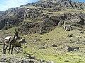 Cerro y Animales.jpg