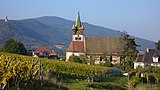 Vinhedos de Alsácia perto de Châtenois.