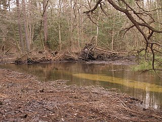 Chapel Branch (Lewes Creek tributary) Stream in Delaware, USA