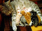 Charline the cat and her kittens
