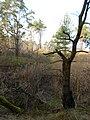 Cherkas'kyi district, Cherkas'ka oblast, Ukraine - panoramio (532).jpg