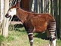 Chester Zoo (8883113763).jpg