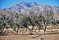 Chiltan Mountain.jpg