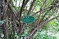 Chimonanthus praecox - Chengdu Botanical Garden - Chengdu, China - DSC03417.JPG