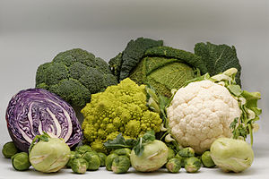 Several cultivars of Brassica oleracea: cauliflower, brussels sprout, green cabbage, red cabbage, broccoli, romanesco broccoli, kohlrabi.