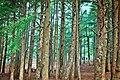 Chrea mountain forest.jpg