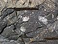 Clast-rich impact pseudotachylite (Sudbury Breccia, Paleoproterozoic, 1.85 Ga; Windy Lake Northwest roadcut, Sudbury Impact Structure, Ontario, Canada) 85 (32815016597).jpg