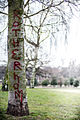 Clifton Park, Rotherham.jpg