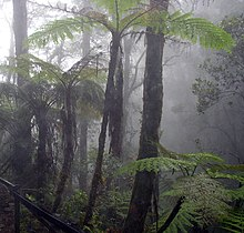 Cloud forest mount kinabalu.jpg
