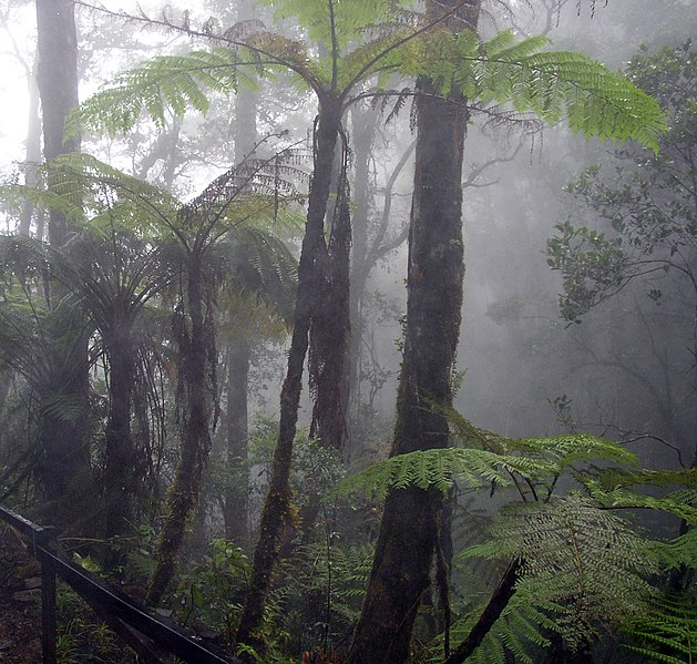 Archivo:Cloud forest mount kinabalu.jpg