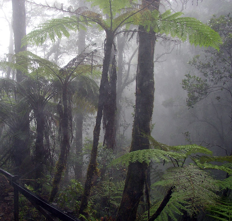 Cloud forest mount kinabalu