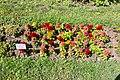 Cluj-Napoca Botanical Garden-9978.jpg