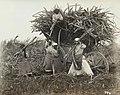 Collectie Nationaal Museum van Wereldculturen TM-60062020 Suikerrietoogst Barbados fotograaf niet bekend.jpg