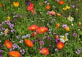Colors! (13950558197).jpg