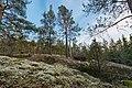 Coniferous forest of Palokallio in Kuninkaanmäki, Vantaa, Finland, 2021 April - 2.jpg
