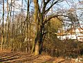 Constantinteich bb10.jpg