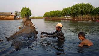 Shrimp farming - A farmer constructing a shrimp farm in Pekalongan, Indonesia