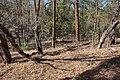 Continental Divide Trail - Flickr - aspidoscelis (44).jpg
