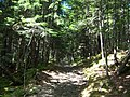 Coppermine Trail, Fundy National Park,.jpg