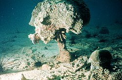 Bioerosion (coral damage) such as this may be caused by coral bleaching.