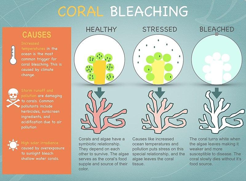https://upload.wikimedia.org/wikipedia/commons/thumb/8/83/Coral_Bleaching.jpg/800px-Coral_Bleaching.jpg