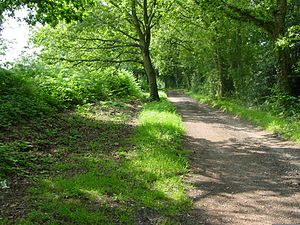 Corfe Mullen - The Roman road east of the village (the road is the overgrown bank on the left)