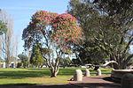 Cornwall park 0631 (9798007543).jpg