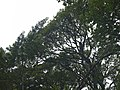 CostaRica (6164306955).jpg