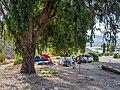 Cottonwood Cove Upper Campground (c317b9ef-f7d5-4053-a401-ab0307996001).jpg