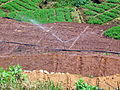Crop seedling beds irrigated in Kerala India 2008.jpg
