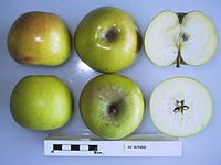 Cross section of De Bonde, National Fruit Collection (acc. 1947-173).jpg