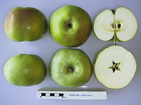 Cross section of Ponsford, National Fruit Collection (acc. 1950-003).jpg