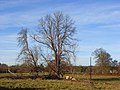 Crowsley Park - geograph.org.uk - 1059524.jpg