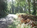 Crynant Forestry Walk - geograph.org.uk - 963625.jpg