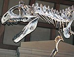 Cryolophosaurus ellioti theropod dinosaur (Hanson Formation, Lower Jurassic; Mt. Kirkpatrick, Queen Alexandra Range, Transantarctic Mountains, Antarctica) 10 (46105158912).jpg