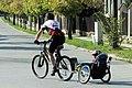 Cyklista s dětským přívěsem.jpg