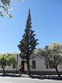 Cypress Tree Beaufort West 2.JPG