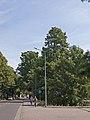 Cypresses at Grillendamm Brandenburg.jpg