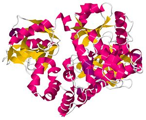 DNA ligase - Image: DNA Ligase