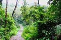 DSC00350 Java East Ijen Tableland Trail to Volcano Kawah Ijen (6229501397).jpg