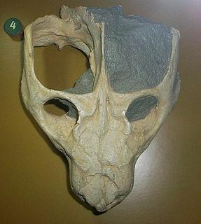 <i>Dadadon</i> genus of mammals (fossil)
