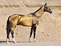 pferde rasse