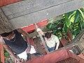 Deïdo Douala January 2013 33.JPG