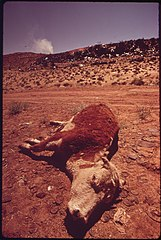 Dead Livestock Left near Moab City Dump. Carcasses Are Not Allowed in the Dump, 05-1972 (3814979646).jpg