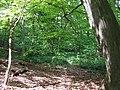 Deciduous Woods, Quatford, Shropshire - geograph.org.uk - 423653.jpg